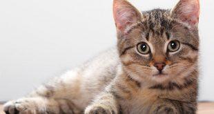 هل للرقية الشرعية علاقة بموت القطط