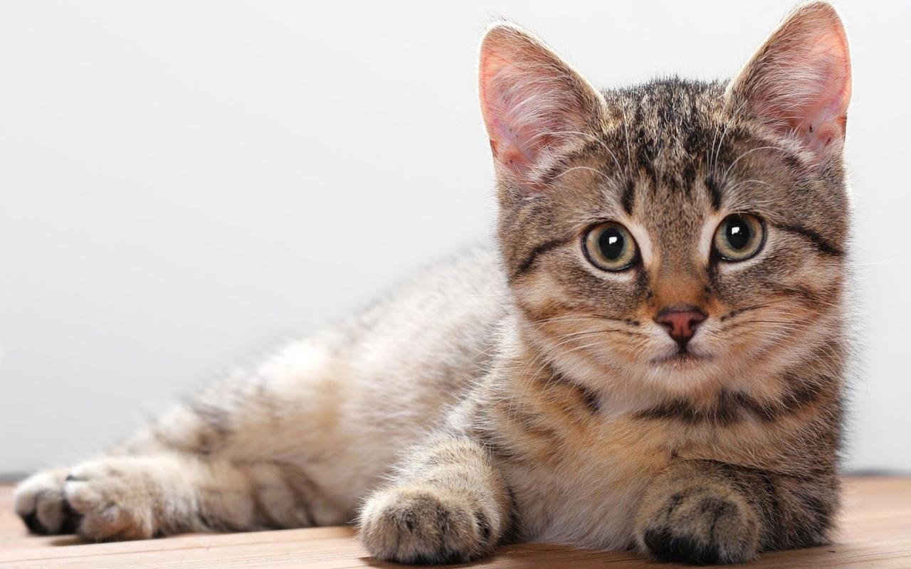 هل للرقيه الشرعيه علاقه بموت القطط