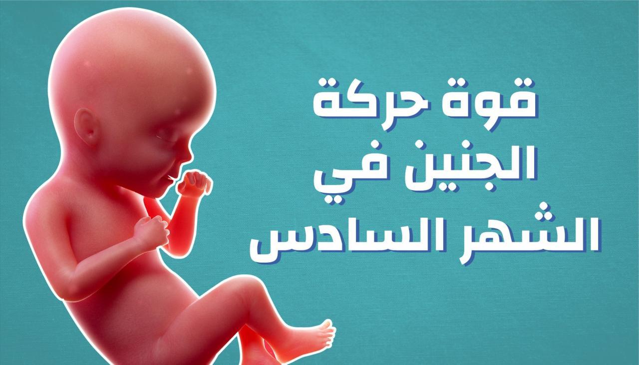 حركة الجنين بالشهر السادس ومكان تواجده