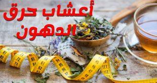 ملف شامل لاعشاب تخفيف و زيادة الوزن